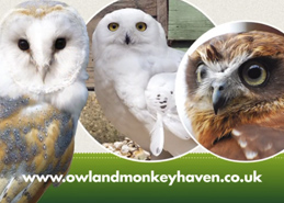 Ferry TV Video Owl and Monkey Haven Thumbnail